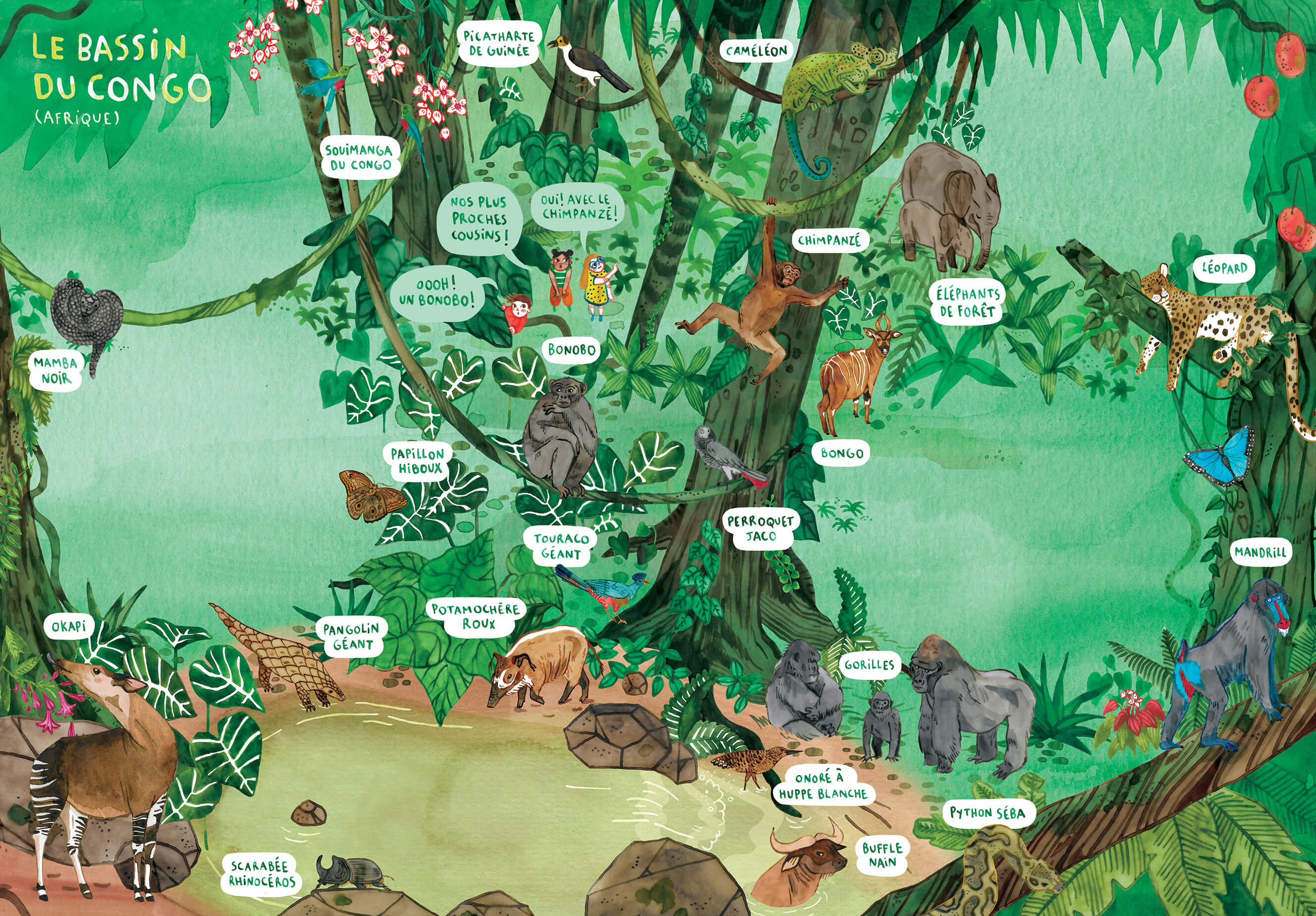 Kid's book illustration of the Congo rainforest