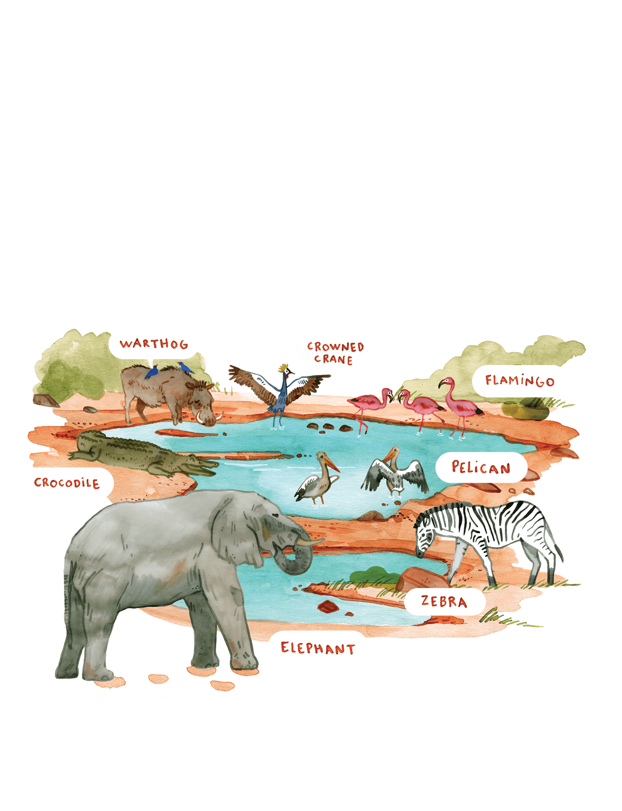 Editorial illustration of a waterhole in Senegal