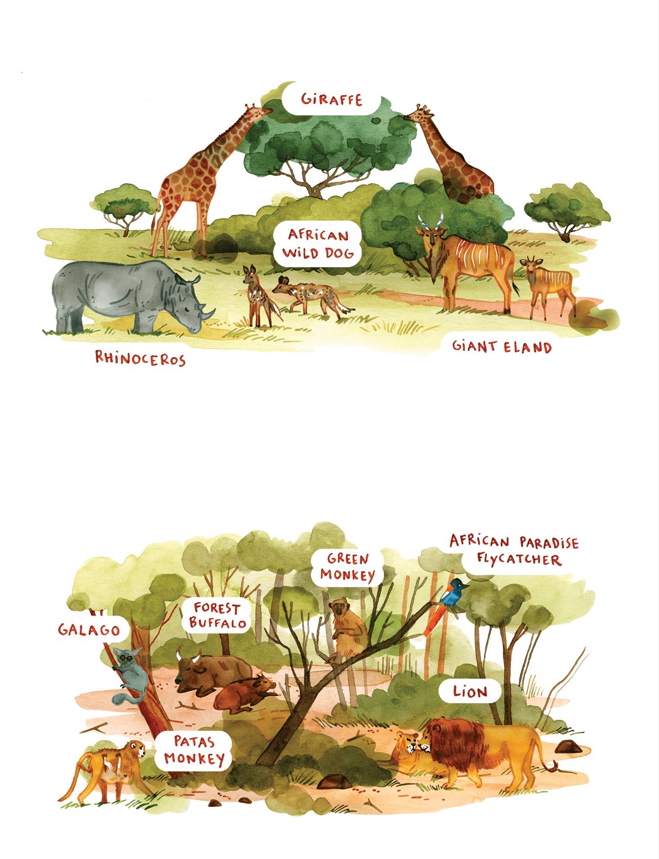 Two editorial illustrations of Senegal's savannah