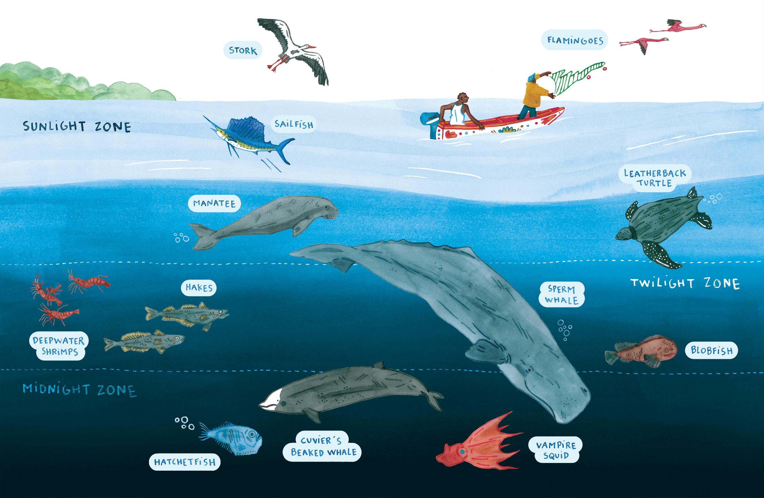 Editorial illustration of Senegal's marine life