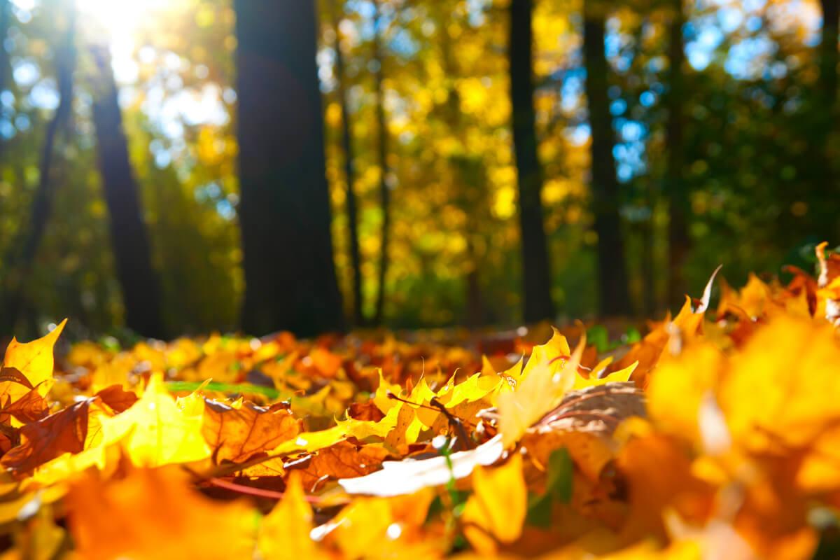 Accumulation de feuilles mortes à l'automne