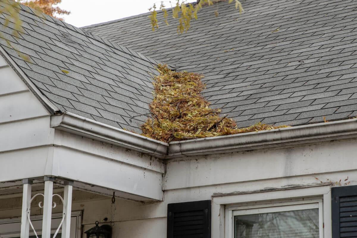 Accumulation de feuilles mortes entre deux pans de toiture bloquant un angle de gouttière