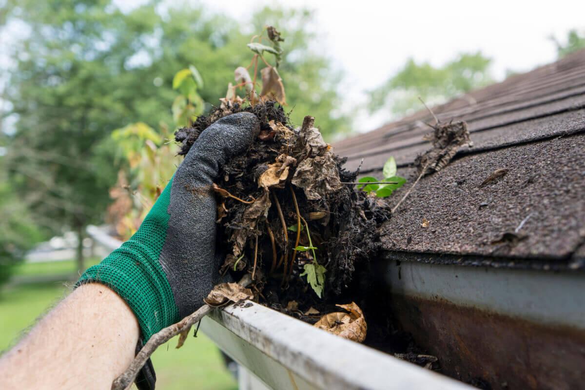 Enlèvement à la main de terre et de débris végétaux accumulés dans une gouttière