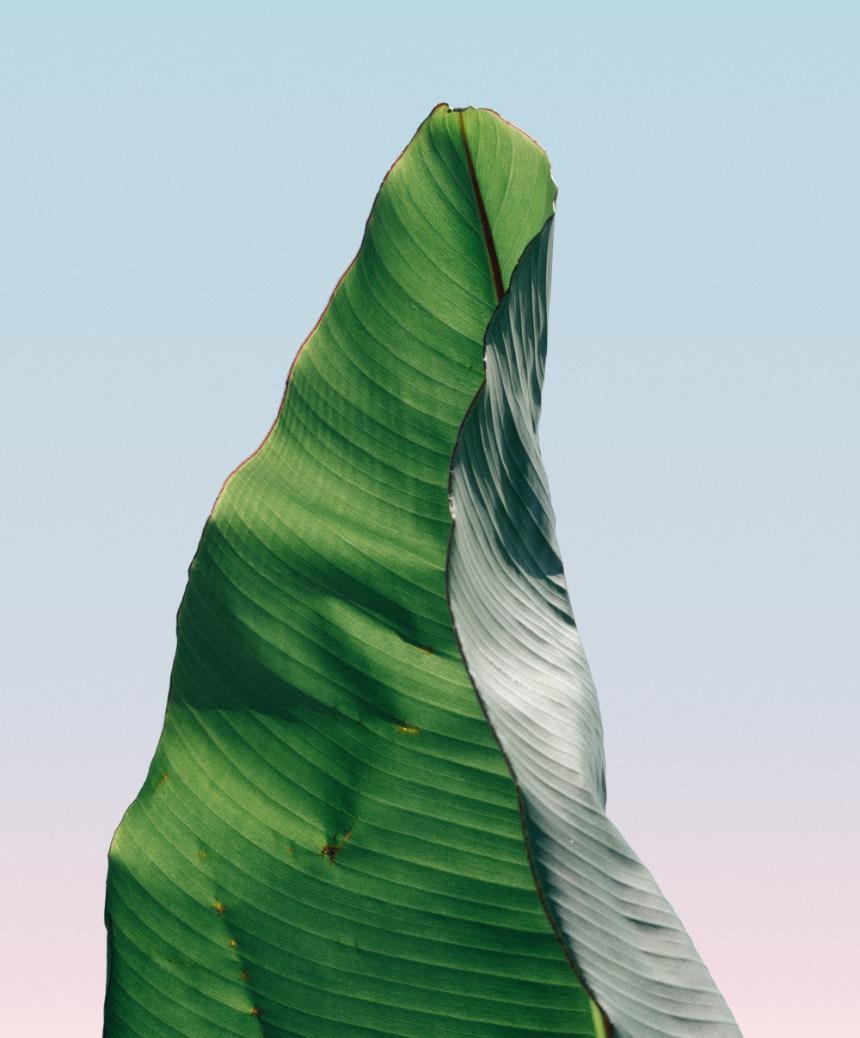 Leaf decorative background