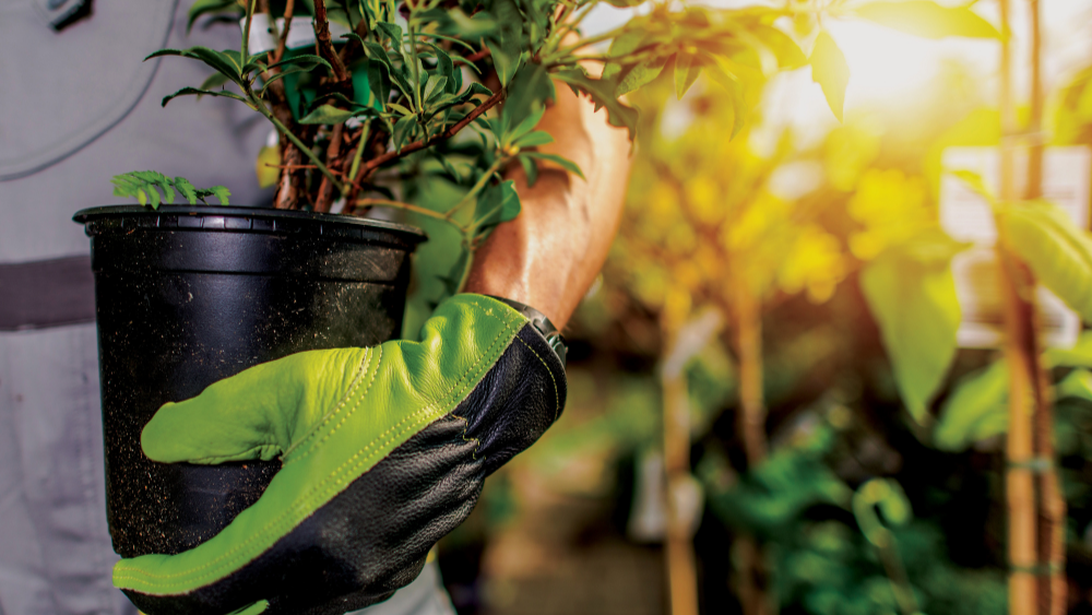 LMN - person wearing gloves holding a plant