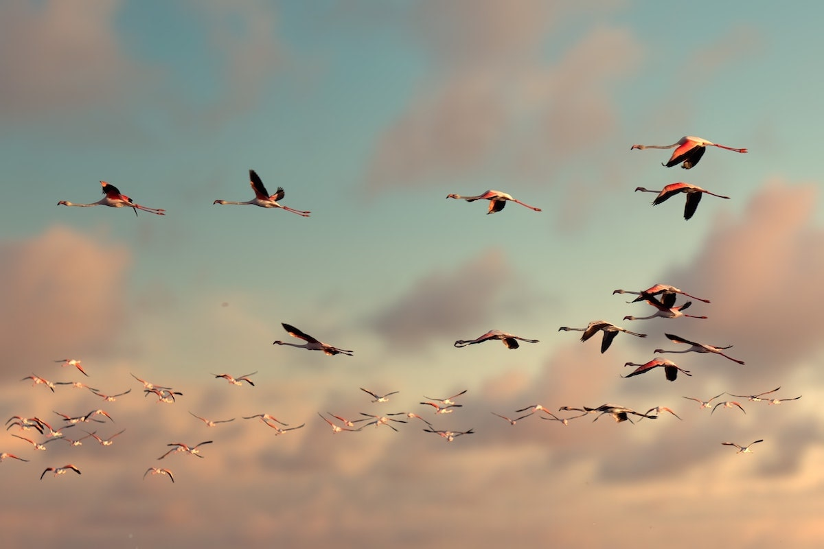 Animal migrations and SEO migrations