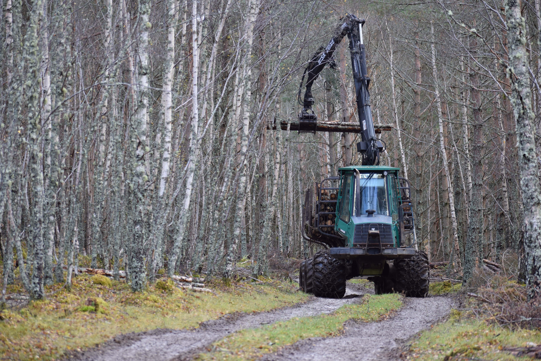 Alleinarbeit Forst