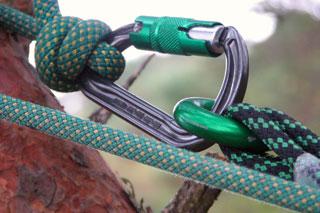 treepartners_LOLER_arborists