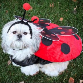 beausy-the-shihtzu-Unique-Female-Dog-Names