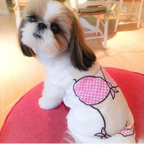 ceilithepuppy-Unique-Female-Dog-Names