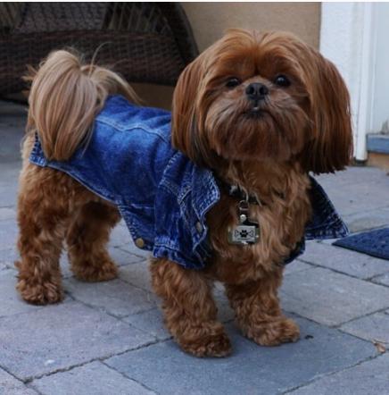 louis-theodore-shihtzu-instagram-Unique-Male-Dog-Names
