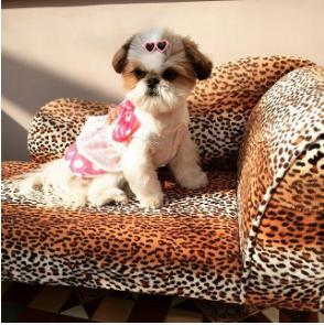 the_tallulah_belle-Unique-Female-Dog-Names