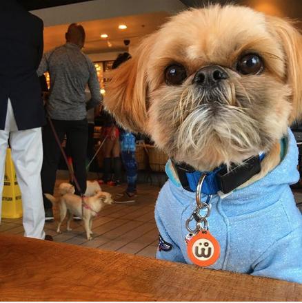 ruben-instagram-shihtzu-Unique-Male-Dog-Names