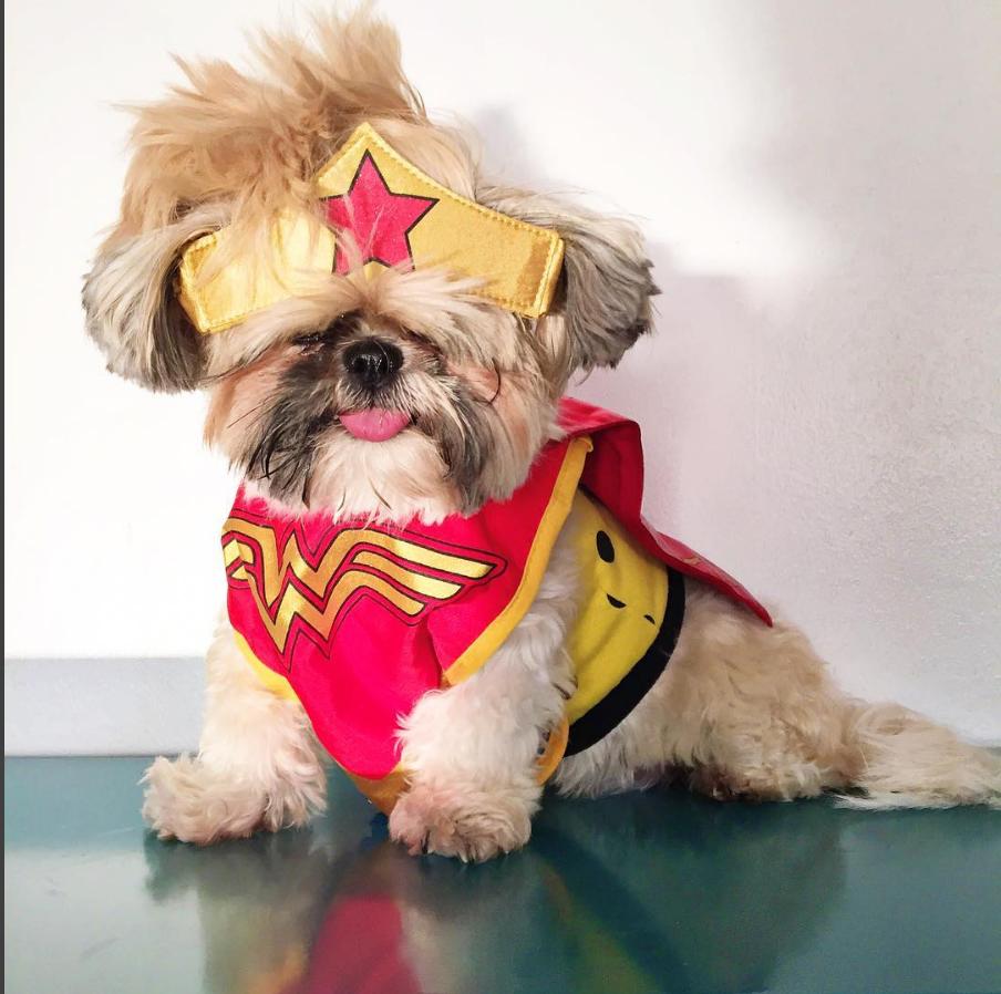 shihtzu puppy-Unique-Female-Dog-Names