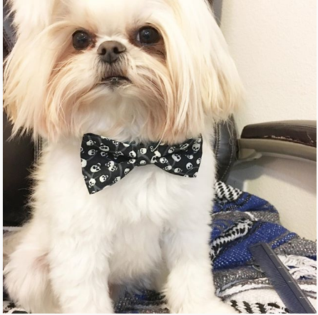 julian-fernando-instagram-shihtzu-Unique-Male-Dog-Names