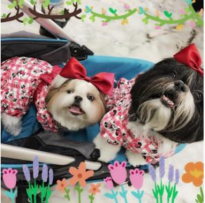 muffin_eclair-Unique-Female-Dog-Names