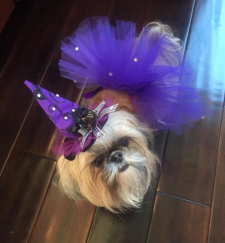 coco-shihtzu-instagram-Unique-Female-Dog-Names