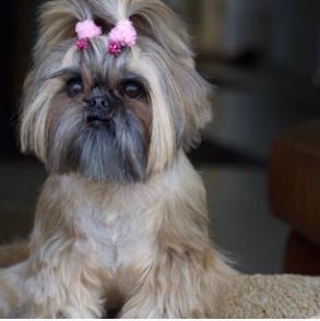 neenee_and_choochoo-Unique-Female-Dog-Names