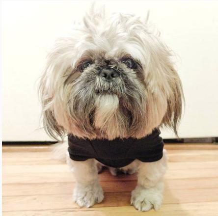 potato-shihtzu-instagram-Unique-Male-Dog-Names