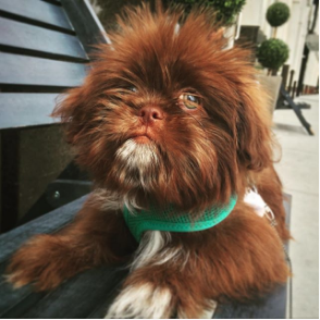 prince-blue-valentino-instagram-Unique-Male-Dog-Names