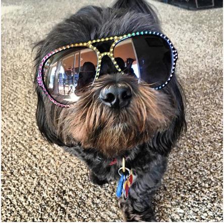 dexter-doggy-instagram-shihtzu-Unique-Male-Dog-Names