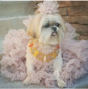sparkles-diva-Unique-Female-Dog-Names