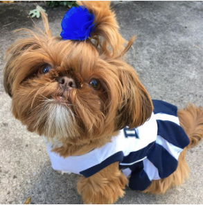 the_southern_belle_annabelle-Unique-Female-Dog-Names