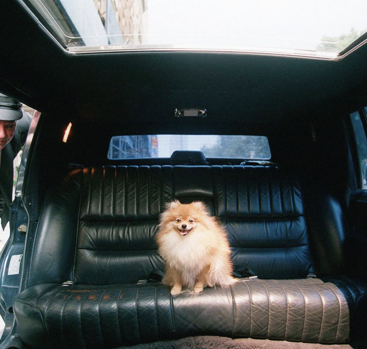 dog-in-limousine-party-bus