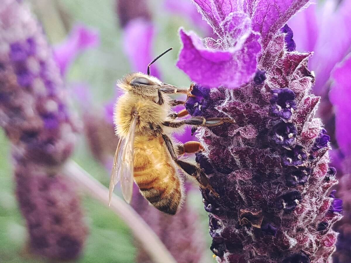 Mother of Grom - 12 Bee Crafts Ideas To Celebrate World Bee Day