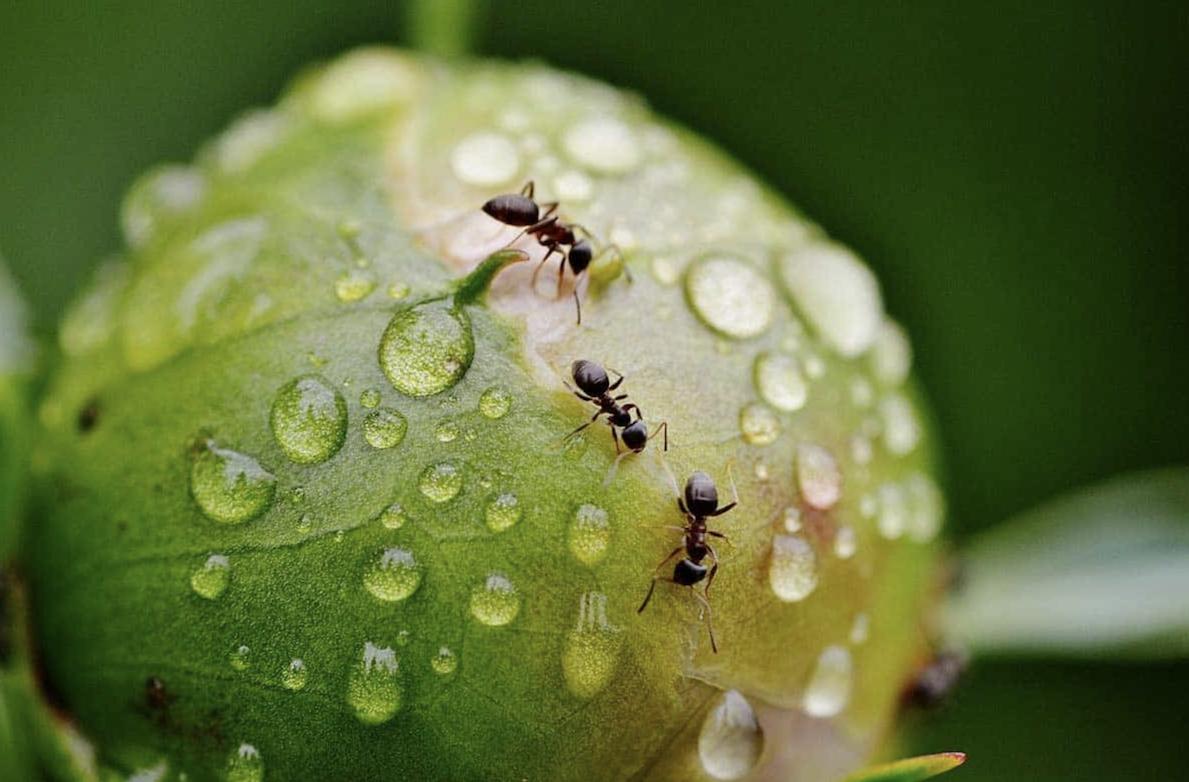 Comment identifier une fourmi |Le guide complet