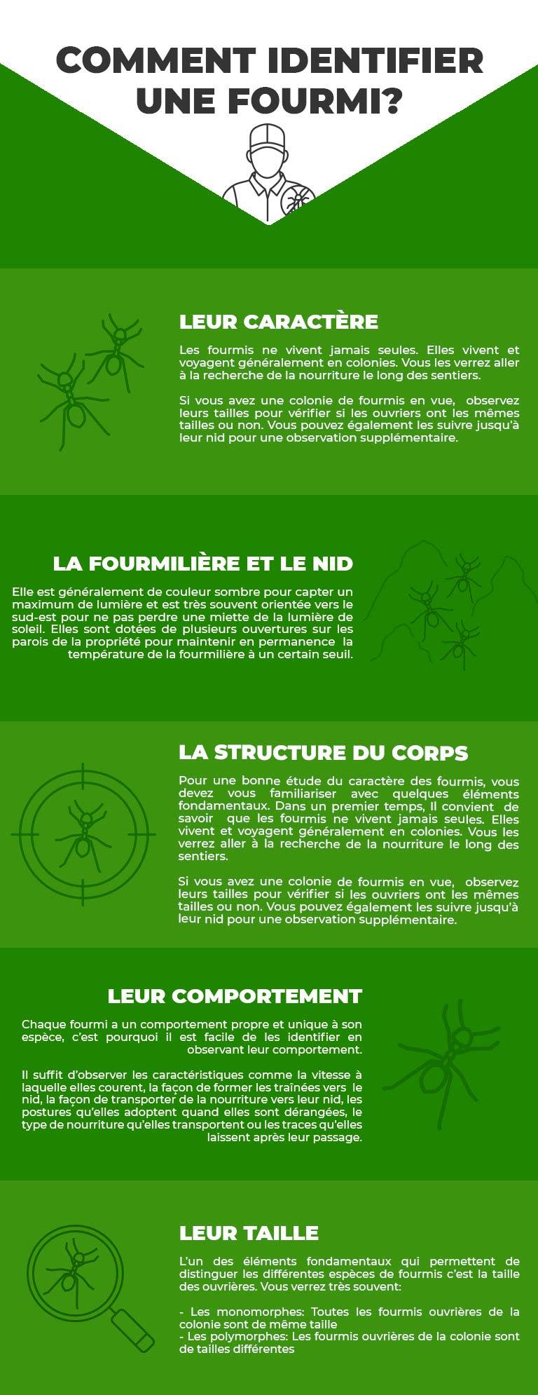 infographie fourmi