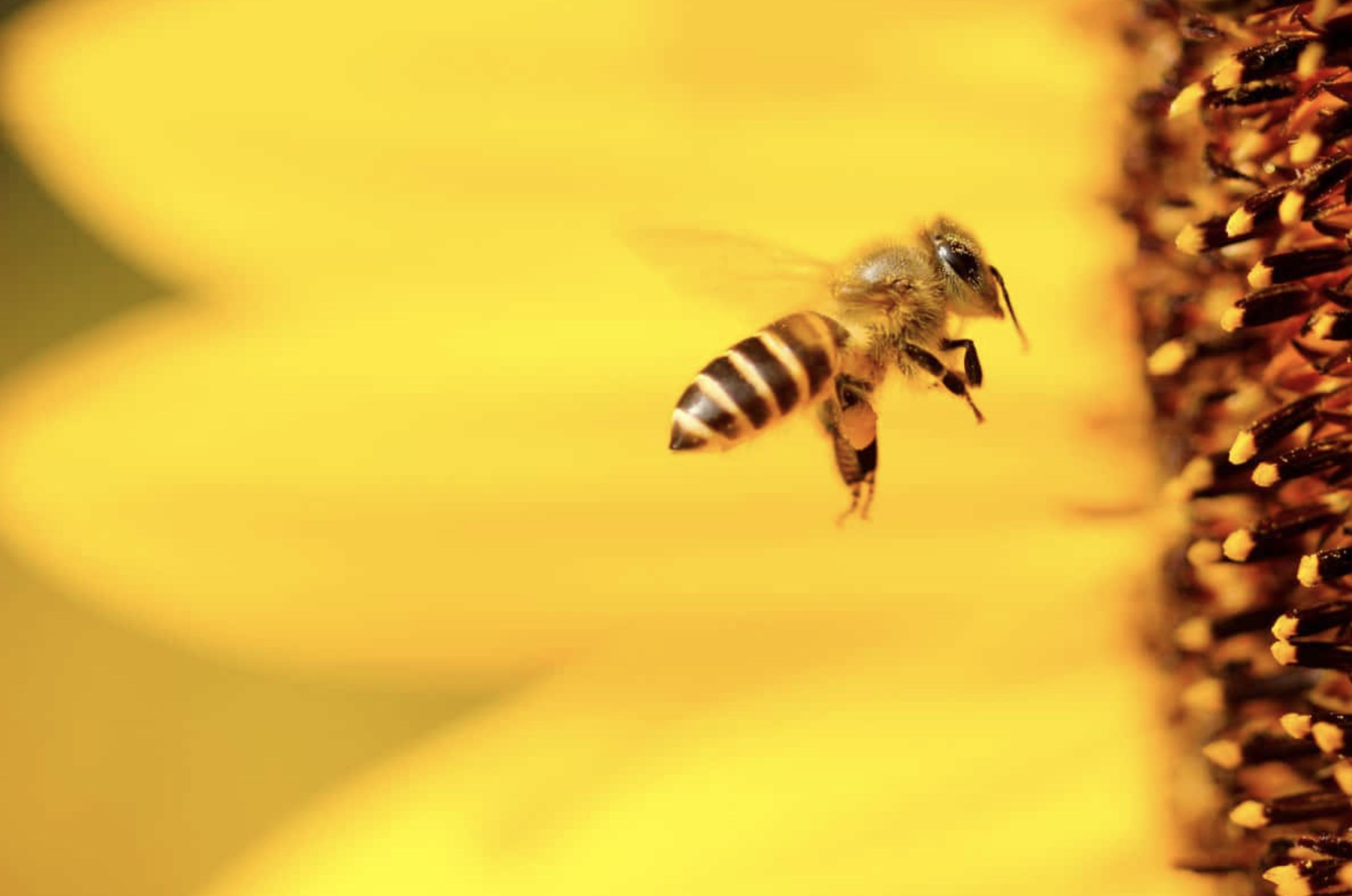 Comment identifier un insecte dans votre maison |Le guide pratique