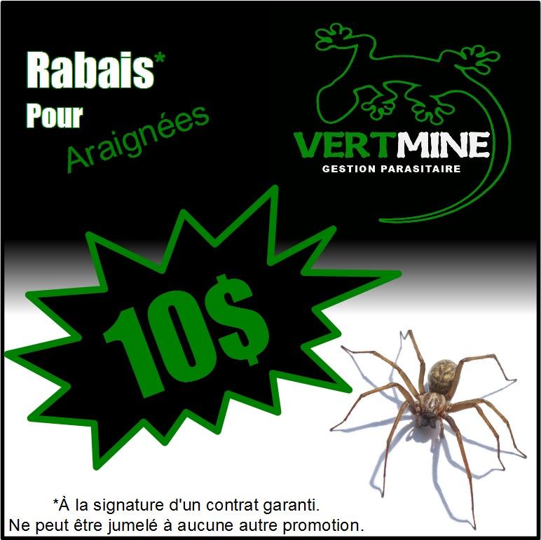 Extermination d'araignées