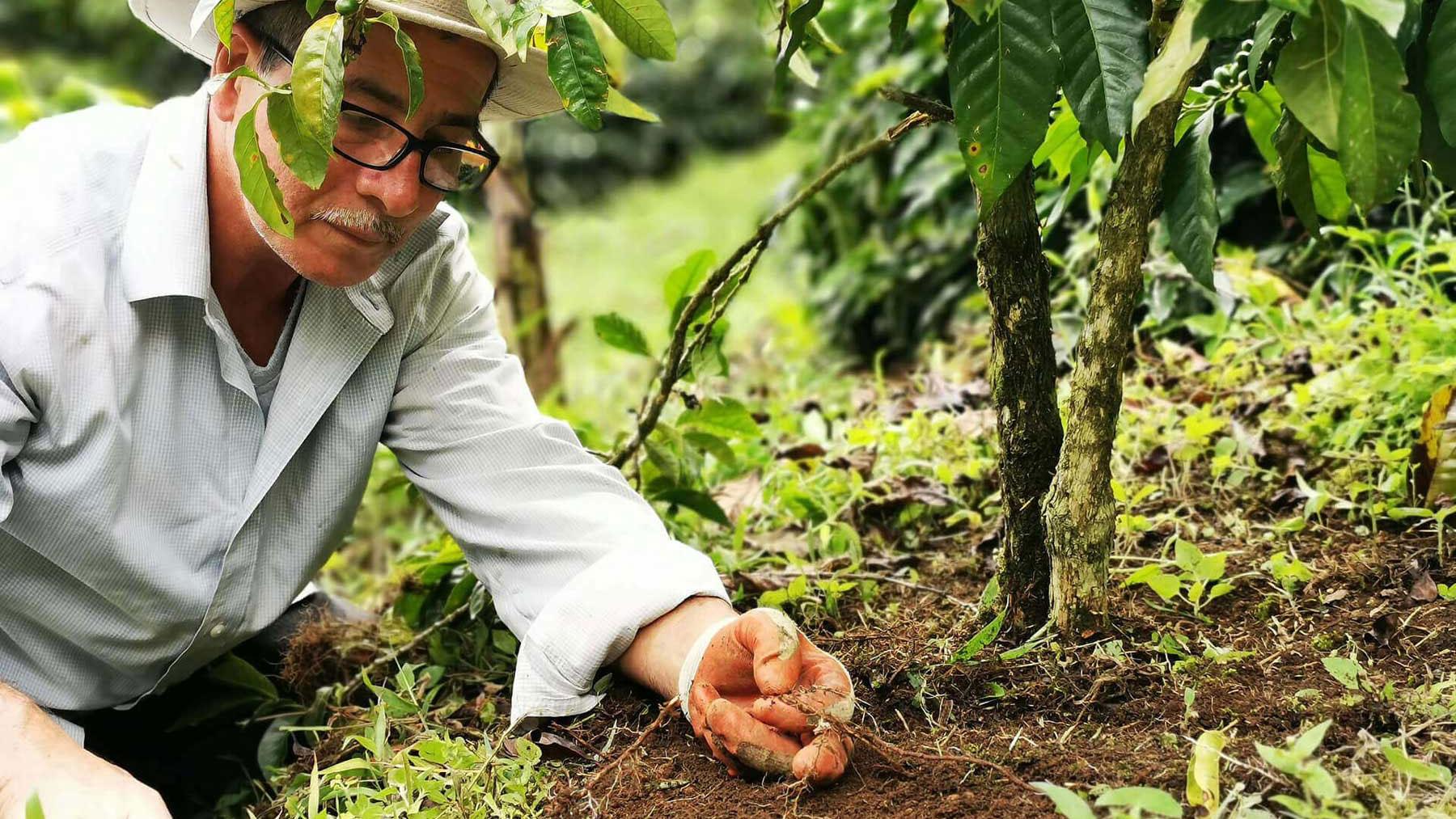 Cerro Verde Costa Rica, Branding