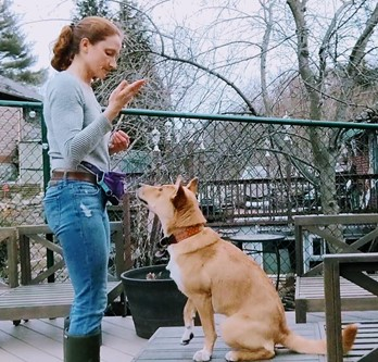 Dog trainer working with dog