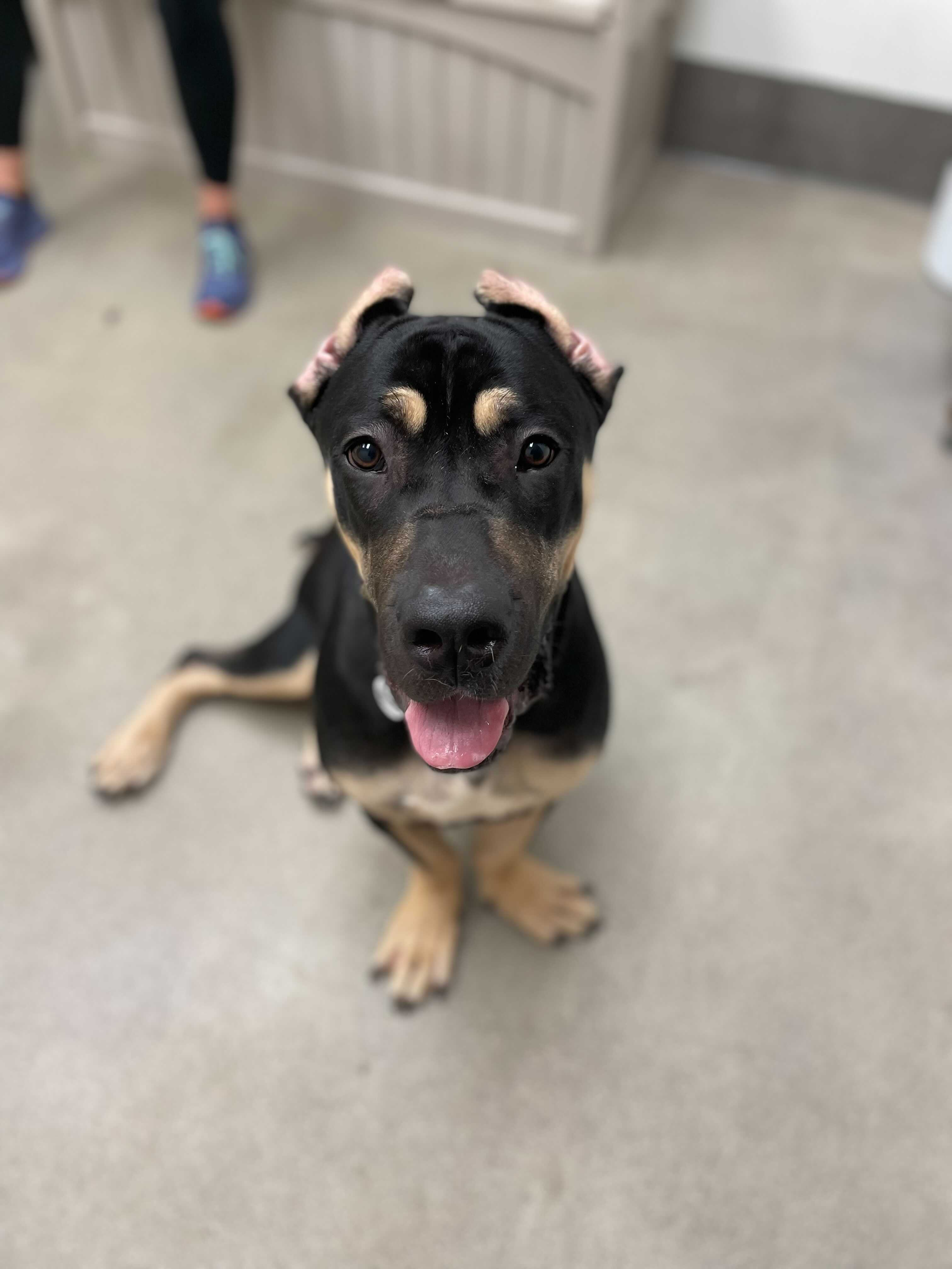 Image of dog from adoptable dogs list