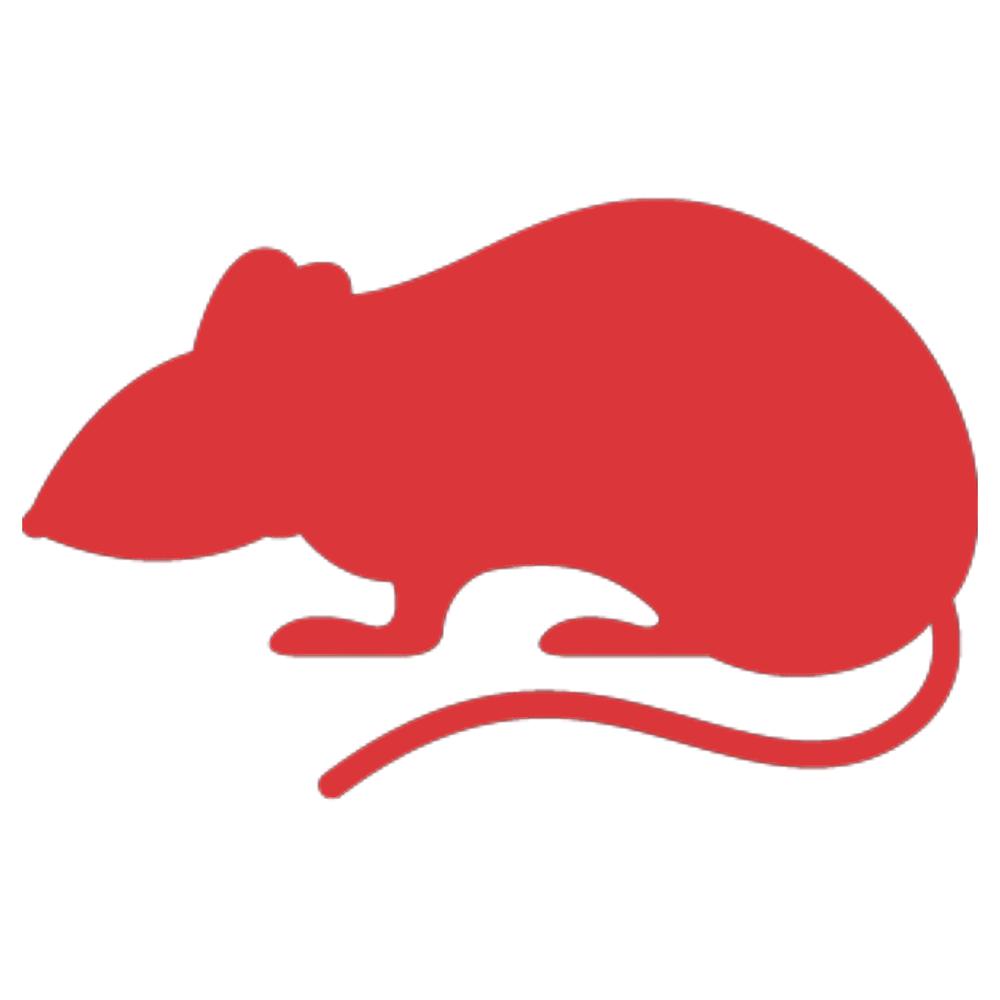 rat red icon 1000x1000