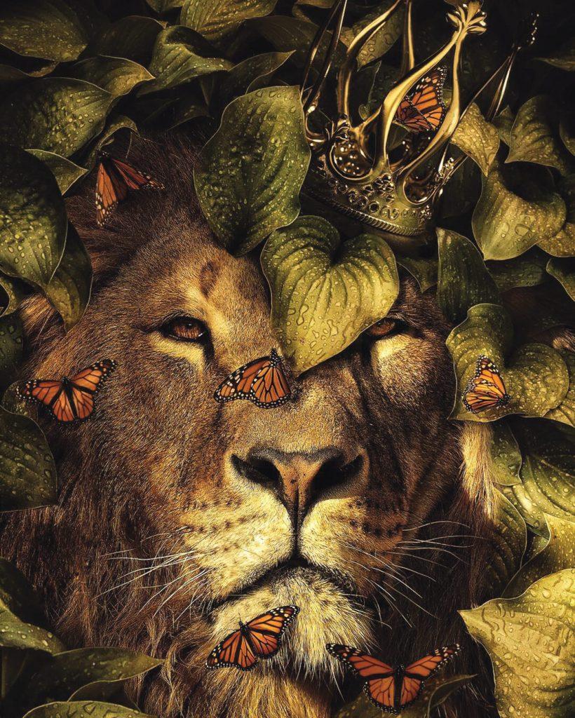 mindset de lion