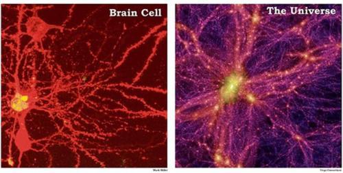 """Résultat de recherche d'images pour """"circuit neuronal univers"""""""