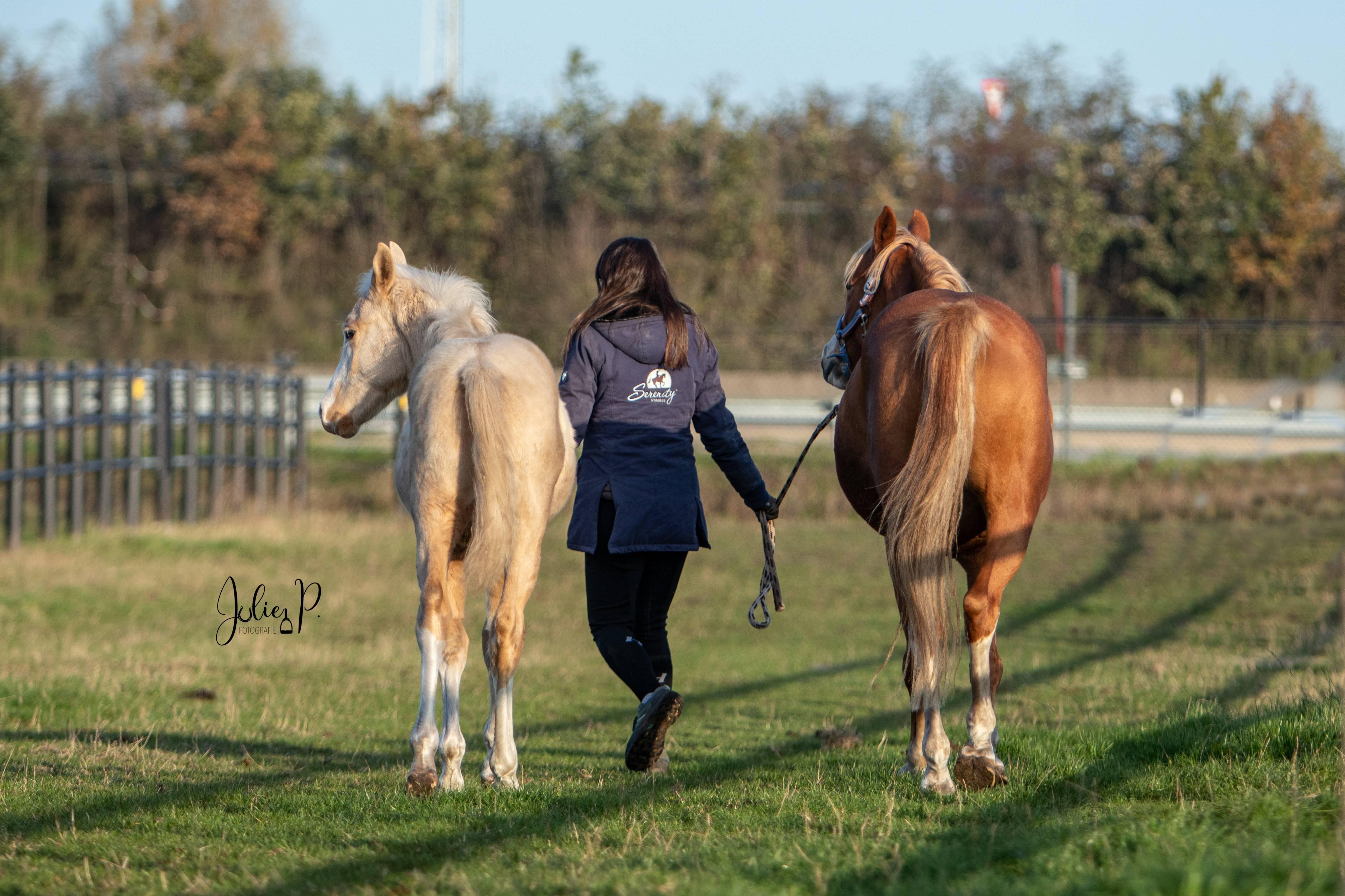 Céline Schelstraete op haar weiland met haar pony en veulen