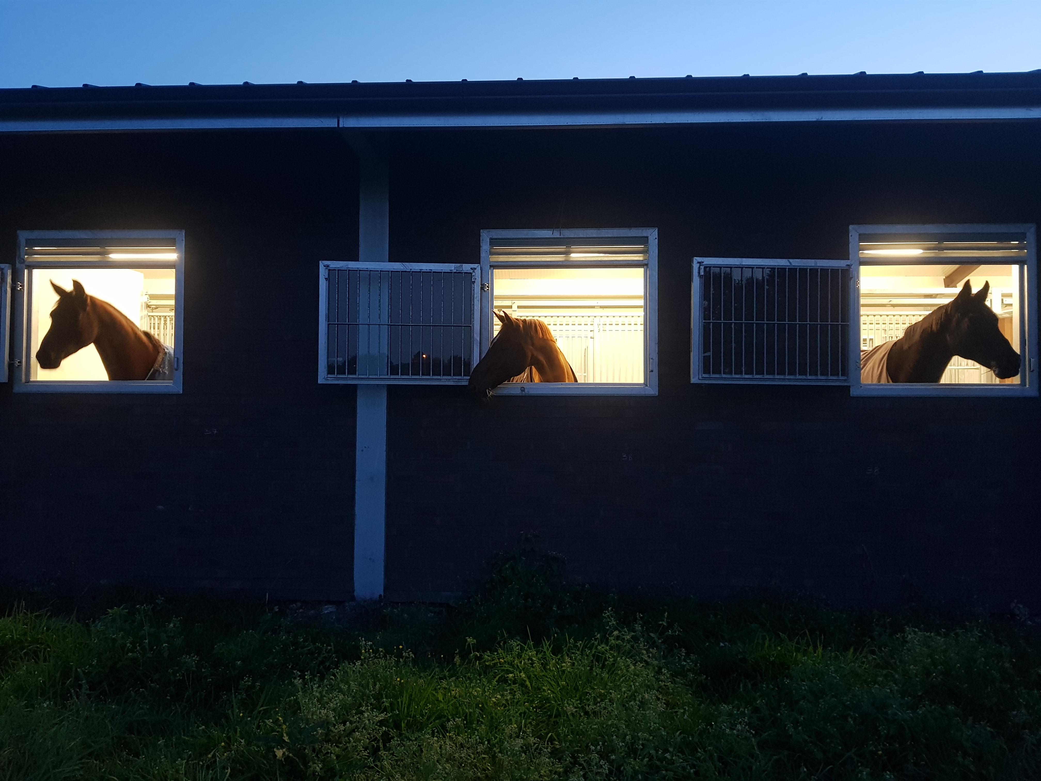 Buitenluik voor paarden bij Serenity Stables