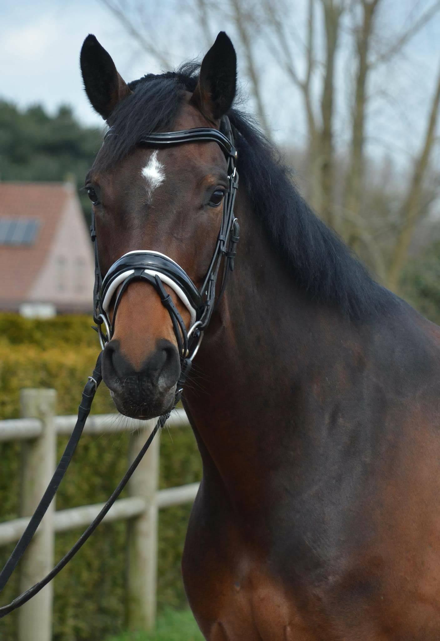 Paard verkocht door Serenity Stables