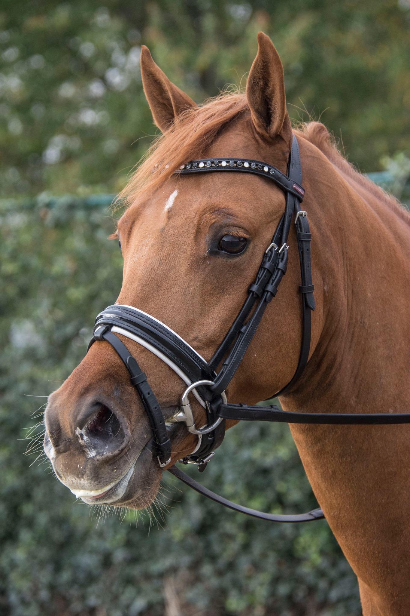Pony verkocht door Serenity Stables