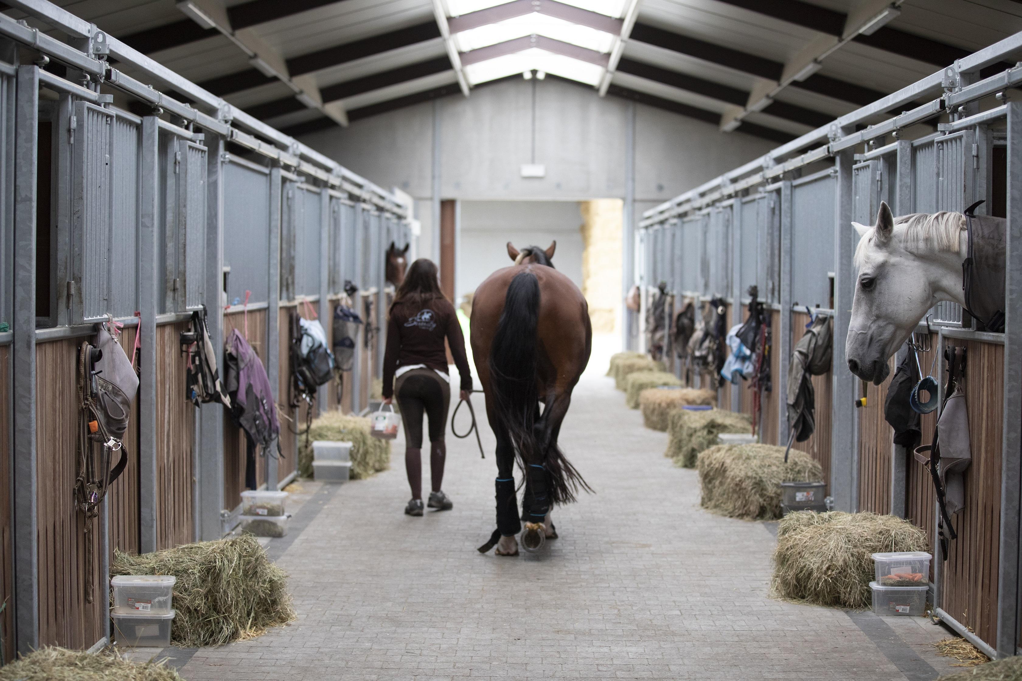 Céline Schelstraete beloont het paard van haar klant