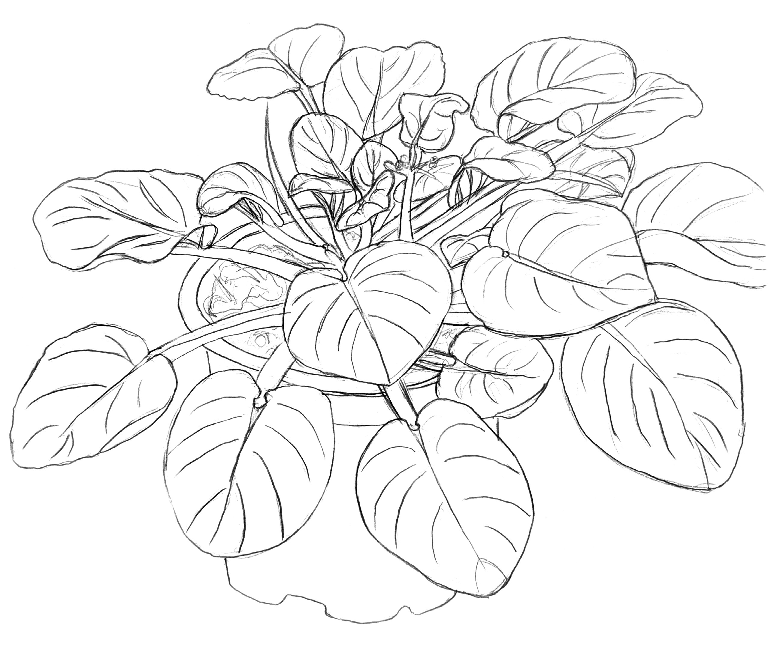 A sketch of a plant