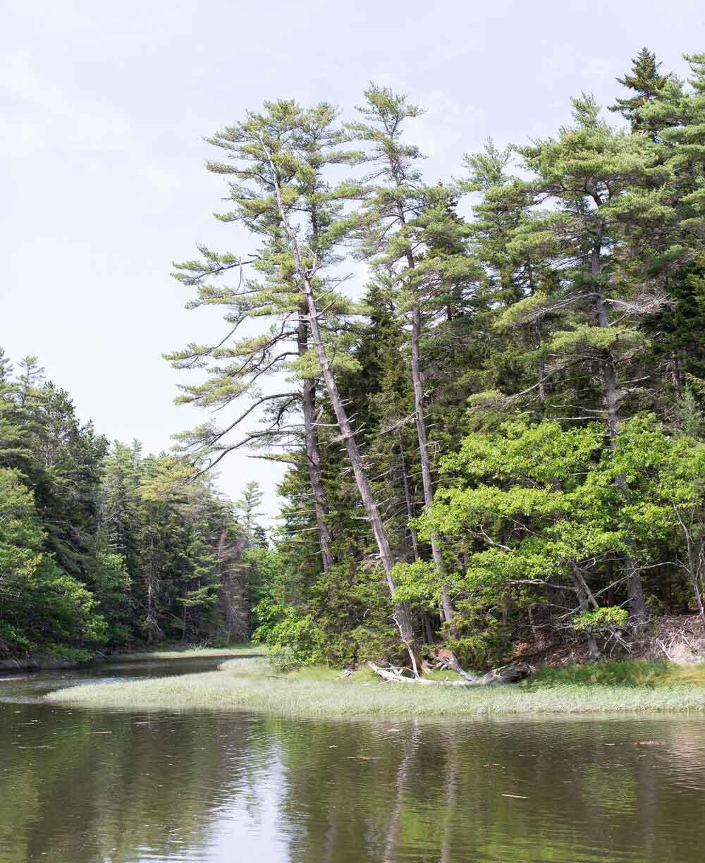 A nature preserve in mid-coast Maine
