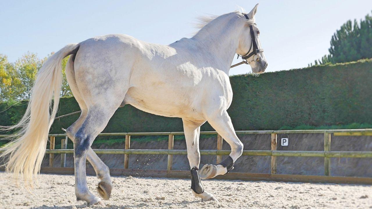 230 chevaux avec cavaliers & cascadeurs