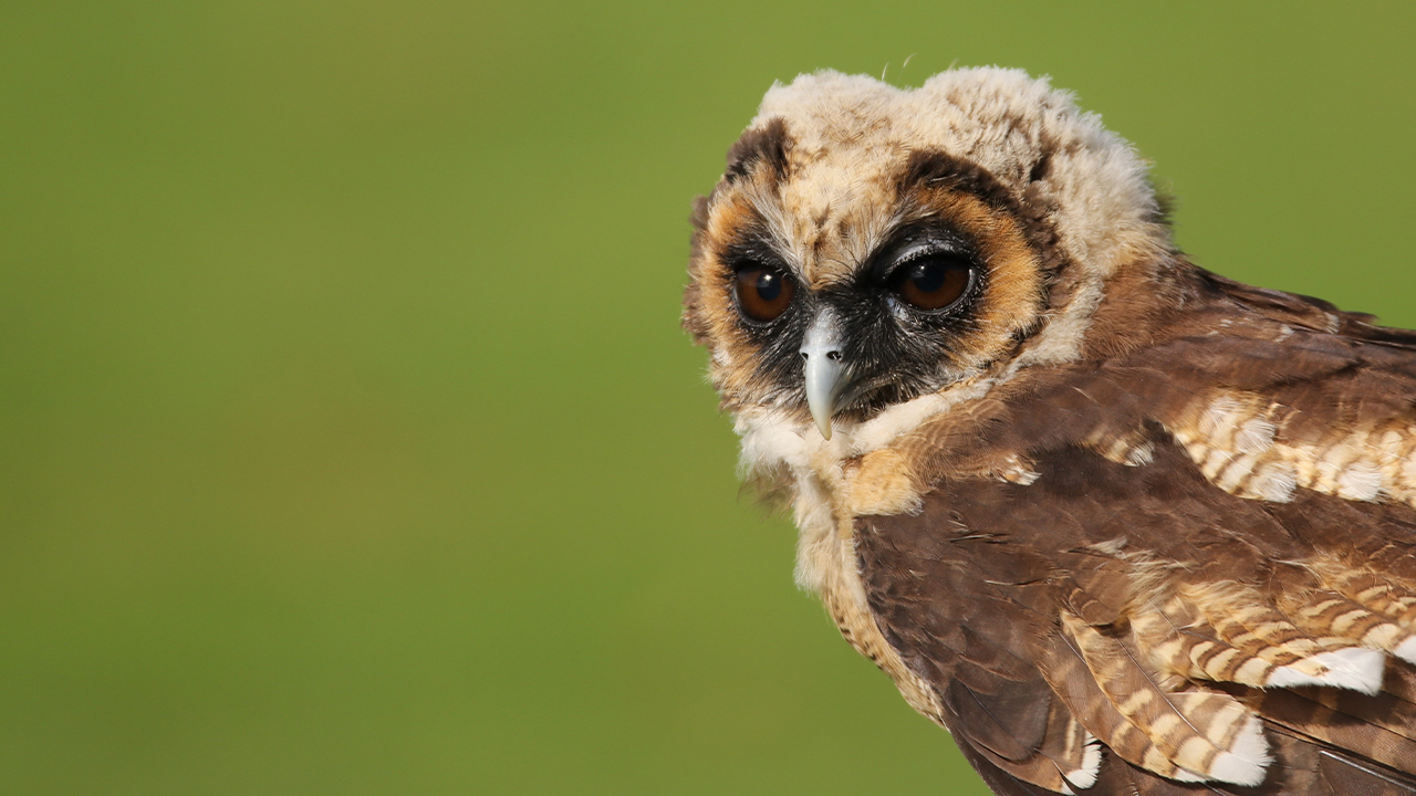 Owl Leptogram