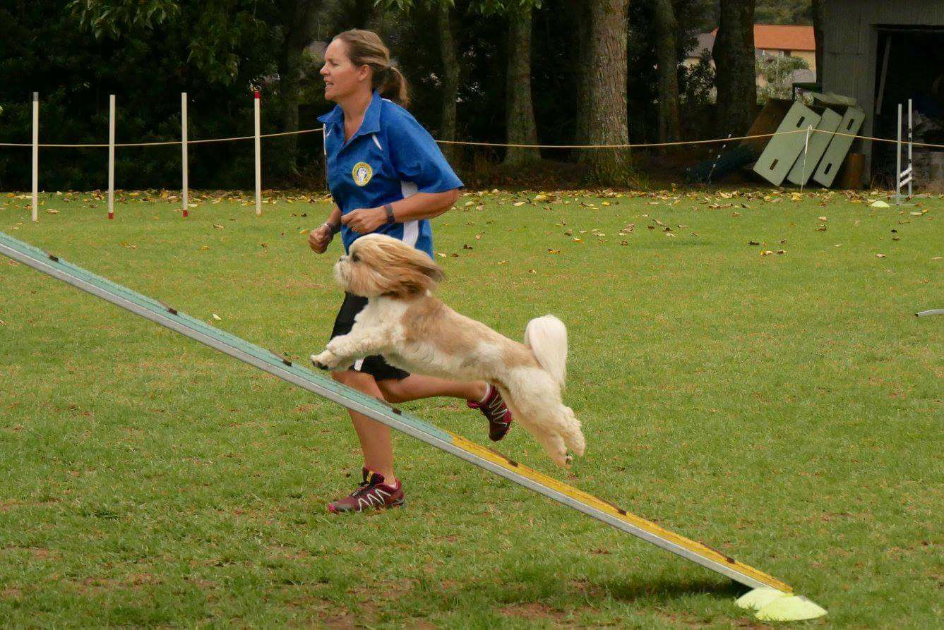 Can dog training techniques teach us something about educating children?