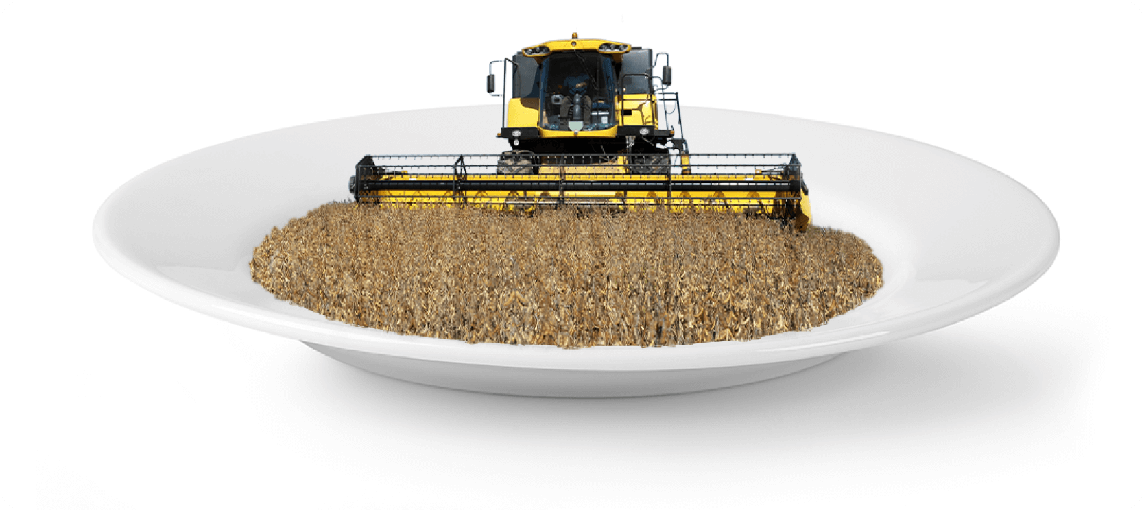Soybean harvest inside a white plate